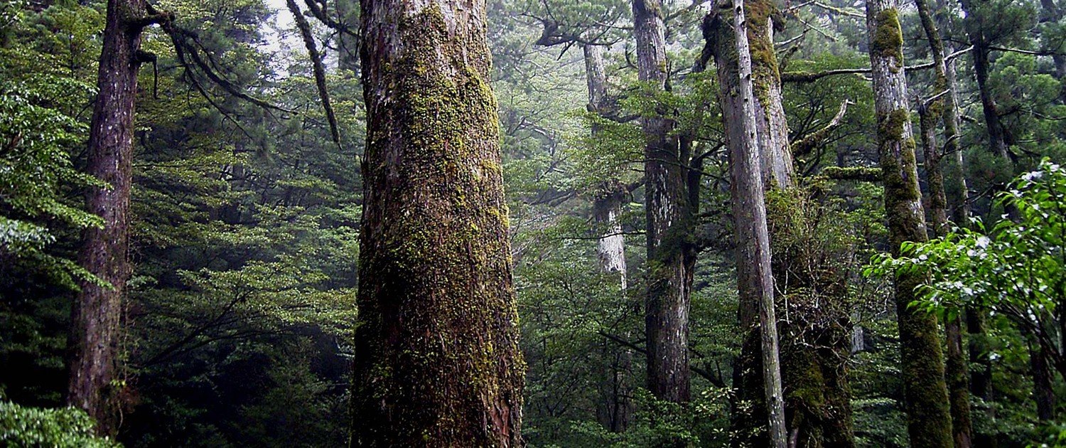 Japan Nature Network Official Wildlife And Environment Resource